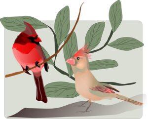 Bird names in Sanskrit