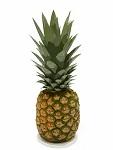 Pineapple in Sanskrit