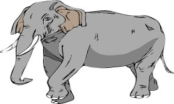 Essay on Elephant in Sanskrit