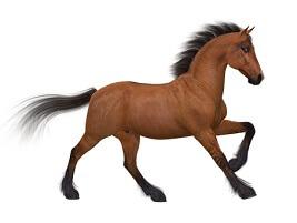 Essay on Horse in Sanskrit